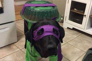Tutor faz fantasia de tartaruga ninja para seu cãozinho