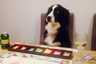 10 cães em fases difíceis com os quais você vai se identificar