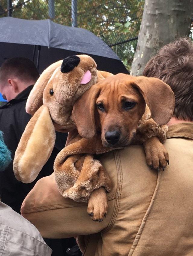 caozinho-fantasiado-de-cachorro