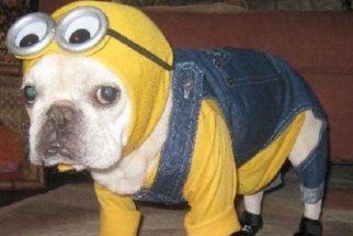 12 fantasias de Halloween criativas para cães