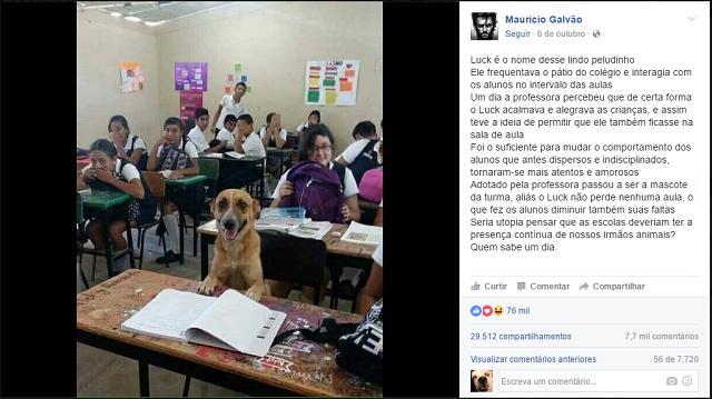caozinho-luck-aluno-de-escola-na-argentina
