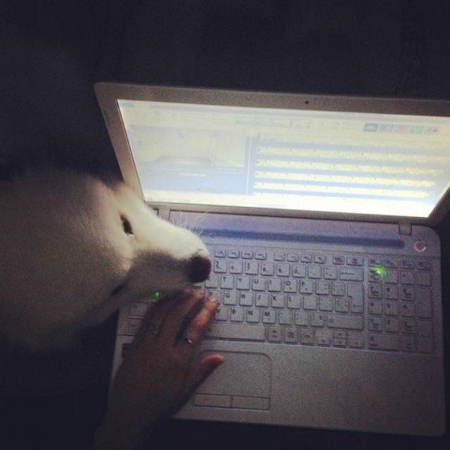 caozinho-nao-quer-deixar-tutora-usar-o-computador