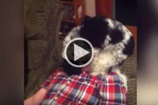 Cãozinho tem reação hilária com assobios de seu tutor