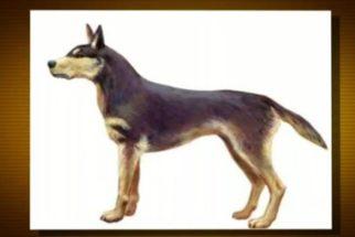 Conheça o cão mais antigo do Brasil e descubra o que ele comia