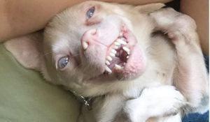 conhecam-tucker-o-caozinho-morcego-sucesso-no-instagram
