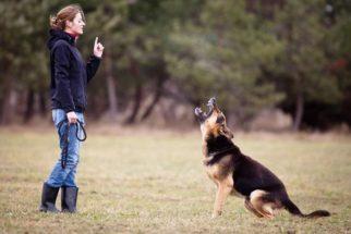 Siga essas orientações e seu cão não irá mais lhe desobedecer