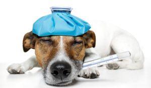 descubra-se-seu-cachorro-esta-com-gripe