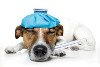 Descubra se seu cachorro está com gripe