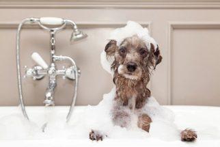 Dicas de como escolher o melhor shampoo para o seu cão