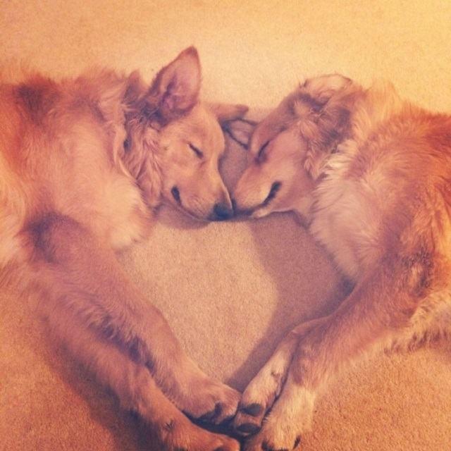 dois-caes-dormindo-juntos-de-maneira-muito-fofa