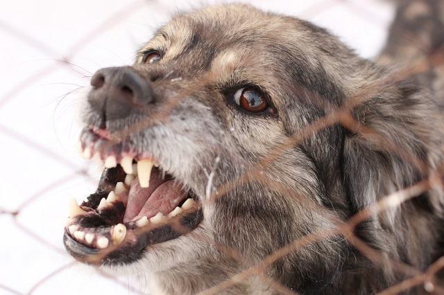 Entenda por que os cães se tornam agressivos