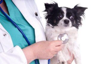 Importância do cuidado com o coração do cachorro