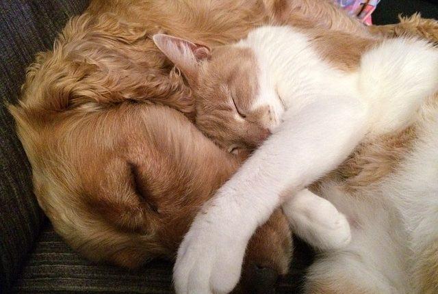 essas-dicas-ajudarao-voce-a-criar-cachorro-e-gato-juntos-em-casa