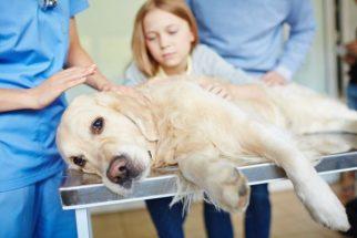 Eutanásia  em cão pode ser substituída por reabilitação