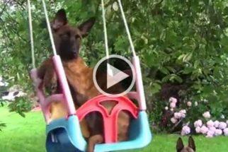 Fofura: cãozinho se diverte em balanço preso em árvore
