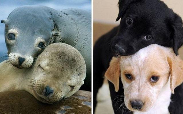 fotos-mostram-que-focas-sao-como-caes-do-mar