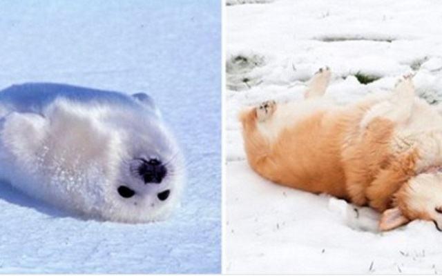 fotos-mostram-que-focas-sao-como-caes-do-mar1