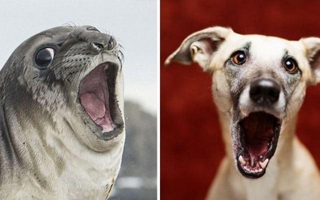 fotos-mostram-que-focas-sao-como-caes-do-mar10