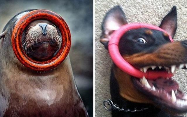 fotos-mostram-que-focas-sao-como-caes-do-mar2