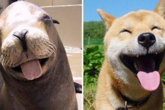 10 fotos que provam que as focas são os cães do mar