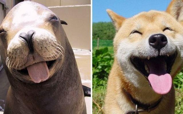 fotos-mostram-que-focas-sao-como-caes-do-mar3