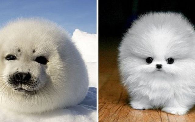 fotos-mostram-que-focas-sao-como-caes-do-mar4