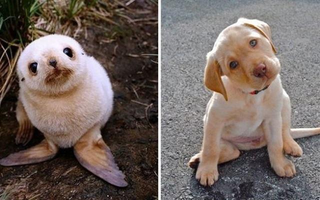 fotos-mostram-que-focas-sao-como-caes-do-mar8