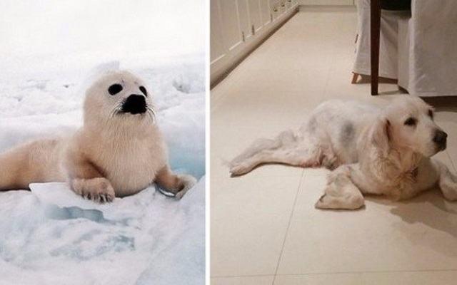 fotos-mostram-que-focas-sao-como-caes-do-mar9
