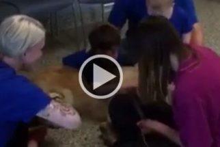 Garoto autista que não suportava ser tocado abraça cão