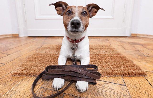 Horário de verão também interfere na vida dos cães