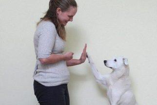 Mulher adota cão surdo e o ensina a linguagem de sinais