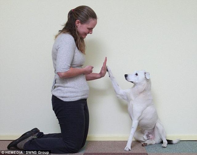 horus-o-cao-surdo-que-apreendeu-a-linguagem-de-sinais