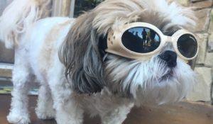 jax-usando-seus-oculos-especiais-para-poder-enxergar-durante-o-dia