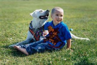 Labrador consegue acabar com pesadelos do seu tutor autista