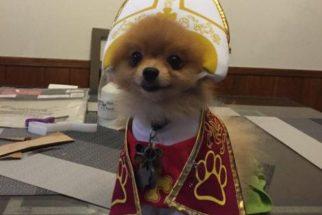 Lulu da pomerânia com fantasia de Papa vai 'abençoar' o seu dia