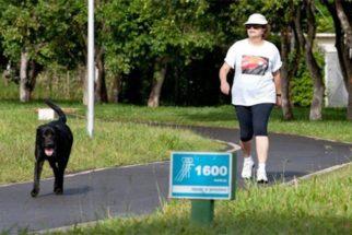 Mielopatia: doença canina que vitimou o cachorro da ex-presidente Dilma