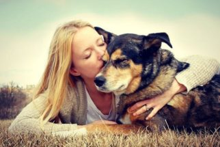 Mitos e verdades sobre a esterilização de cães