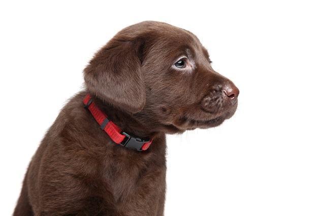 Não use nunca mais coleira errada no seu cachorro