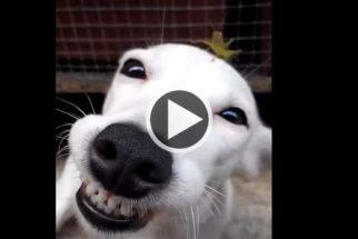 Para rir: cãozinho feliz da vida com grilo em cima de sua cabeça