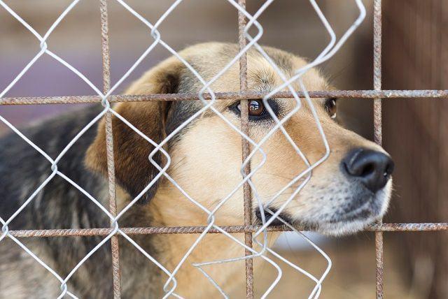 Pesquisa revela: metade dos donos abandonariam seus cachorros