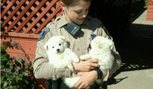 policia-prende-caes-suspeitos-de-disparar-alarme-contra-roubos