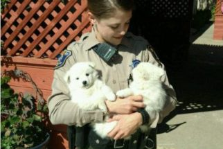Polícia 'prende' cães suspeitos de disparar alarme contra roubos