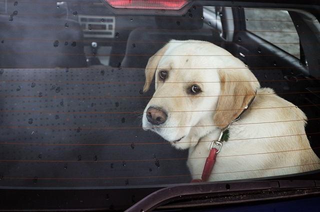 Por quais razões não devo deixar o meu cão dentro do carro?