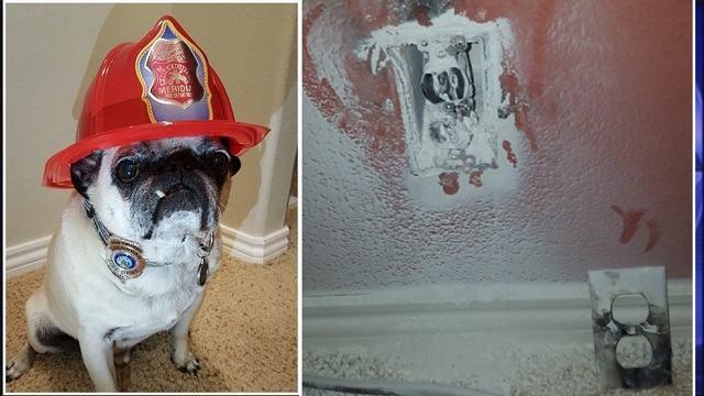 pug-jaxson-salvou-familia-de-incendio-e-foi-condecorado-por-corpo-de-bombeiros