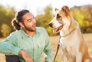 Saiba como falar bem em público com a ajuda do seu cão