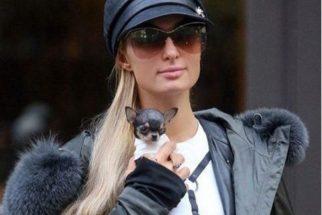 Se surpreenda com o tamanho do novo cão de Paris Hilton