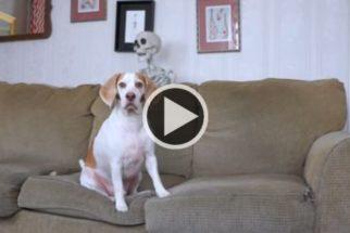 Tutor tenta assustar o seu cãozinho usando um esqueleto