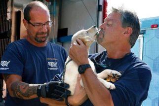 Resgatados de fábricas de carne na Coreia do Sul, cães procuram lar