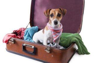 Vai viajar de avião? Saiba quanto custa levar o seu cão