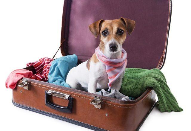 vai-viajar-de-aviao-saiba-quanto-custa-levar-o-seu-cao